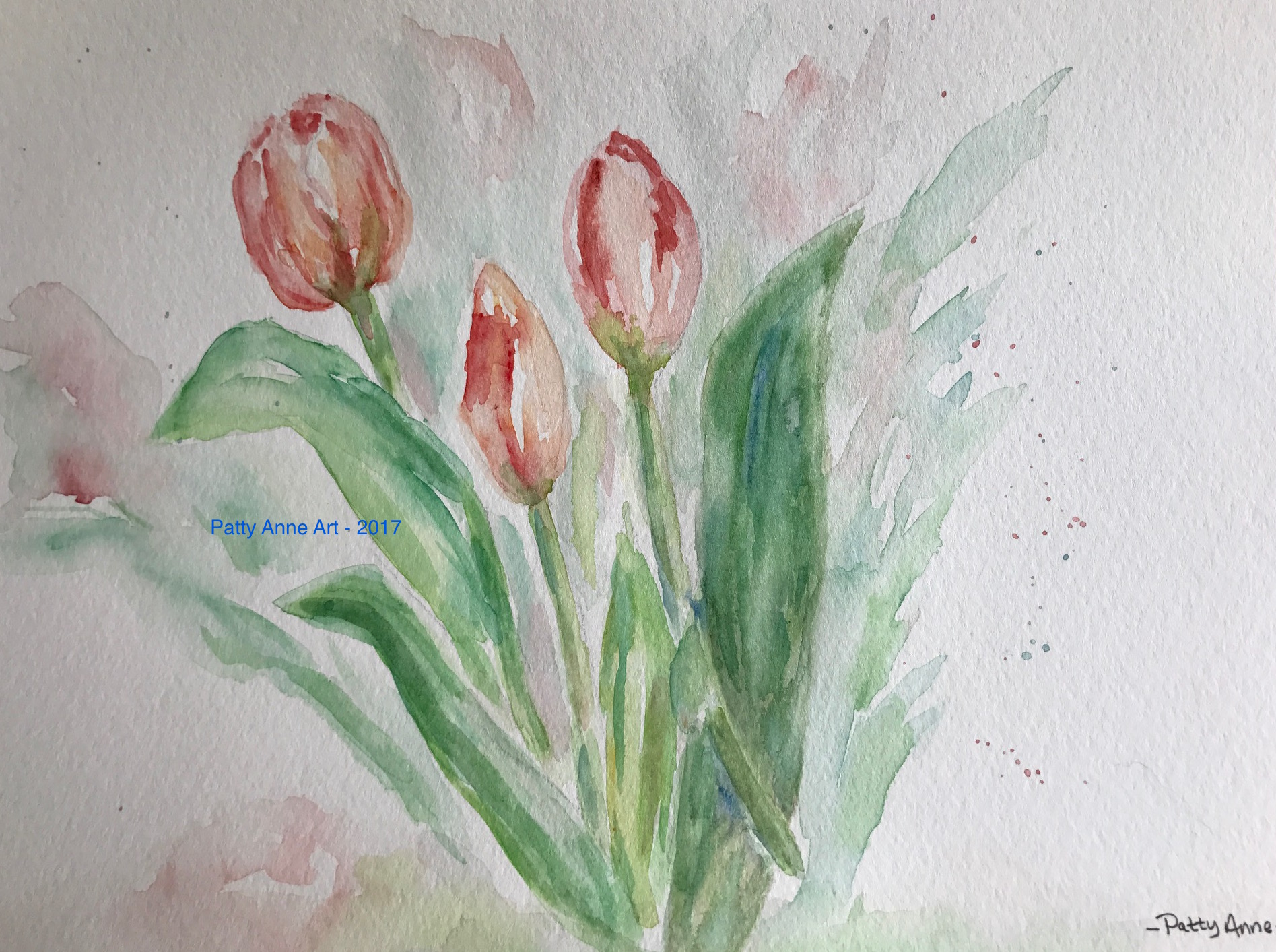 Blushing Tulips 2017
