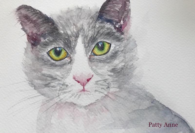 Gray & White Kitty