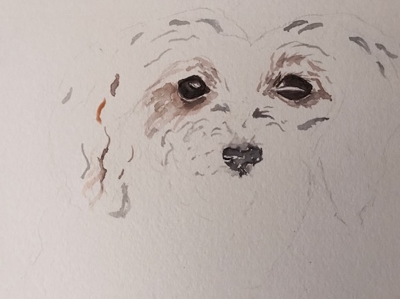 Morkie watercolor- the beginning