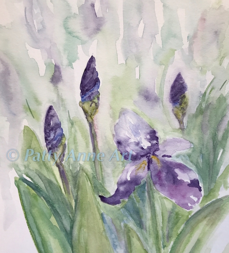 Iris in Bloom watercolor