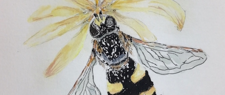Bee - ink and watercolor