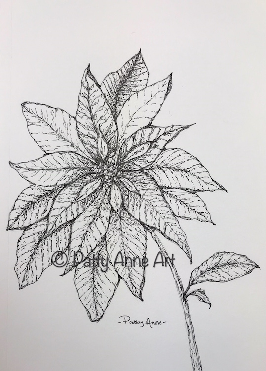 Poinsettia Ink Sketch