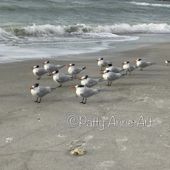 Birdies at the beach