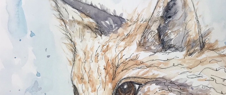 Quiet Thursday – Vixen watercolor
