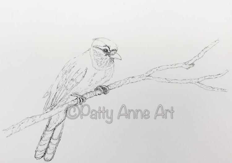 Blue Jay ink sketch