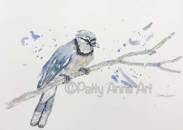 Blue Jay watercolor and ink