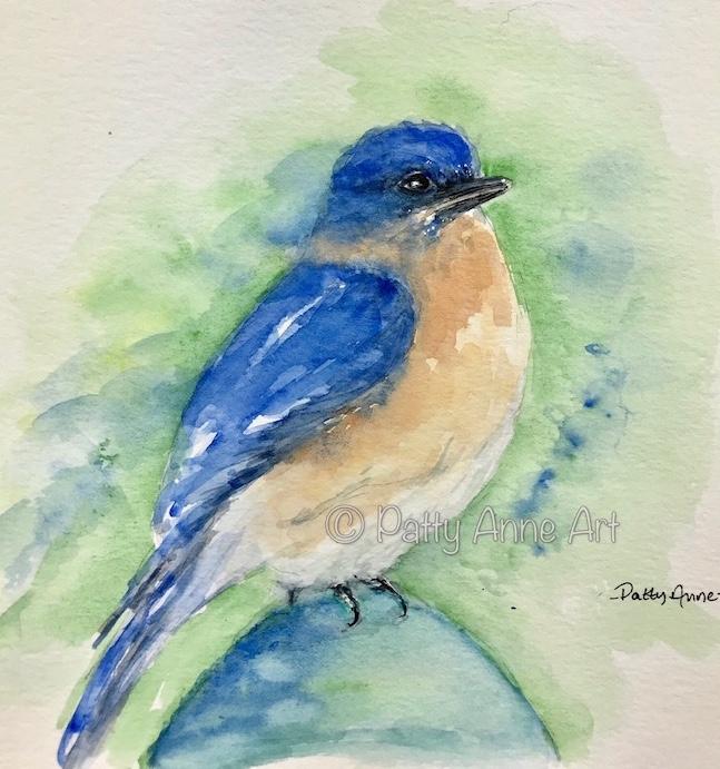 Bluebird on a fence post