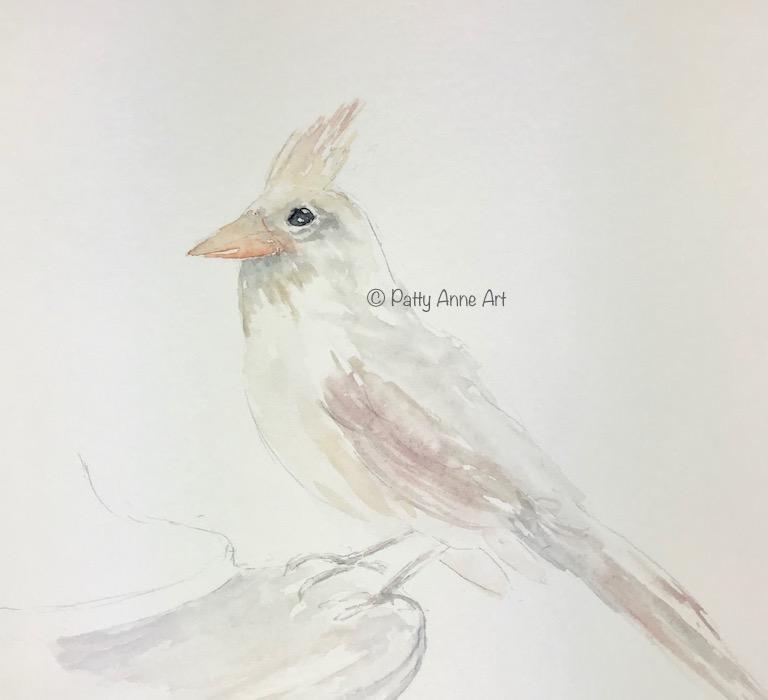 initial wash - female cardinal