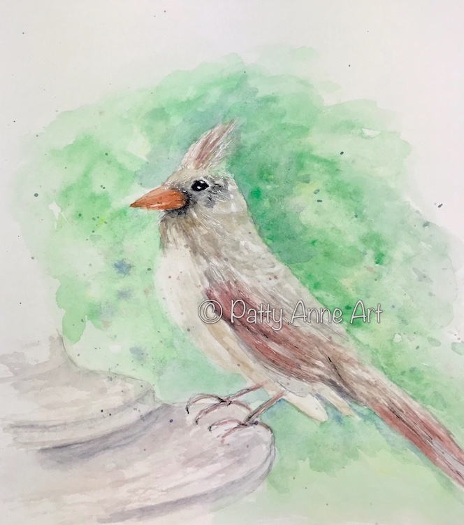 Female Cardinal watercolor