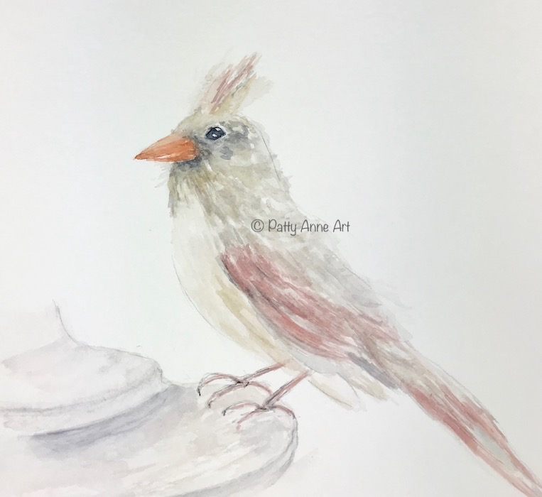 Second wash - female cardinal