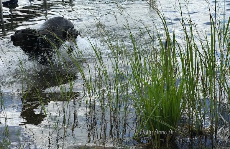 Huey splashing in the lake