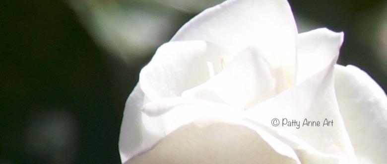 Delicate white rose petals photo