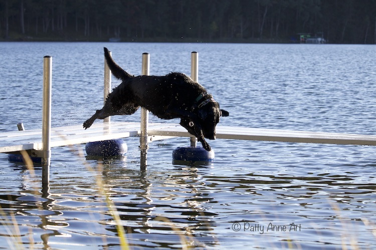 Huey in air dive into the lake photo