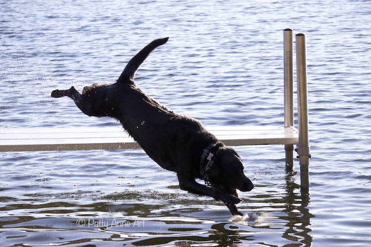 Huey diving into the lake photo