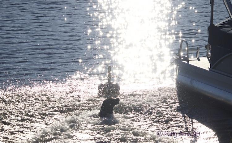 Splashing in the lake photo