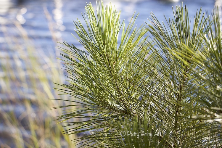 Pine branch at the shore photo