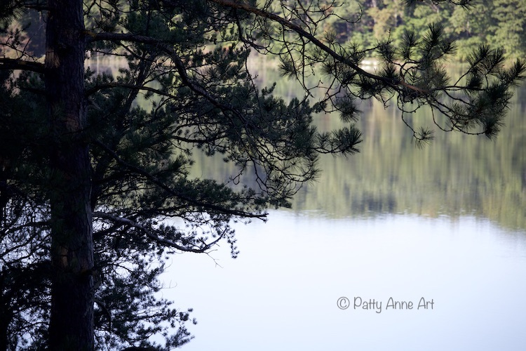 Pines and lake reflection photo