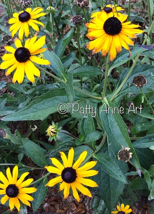 Black-eyed Susan flowers photo