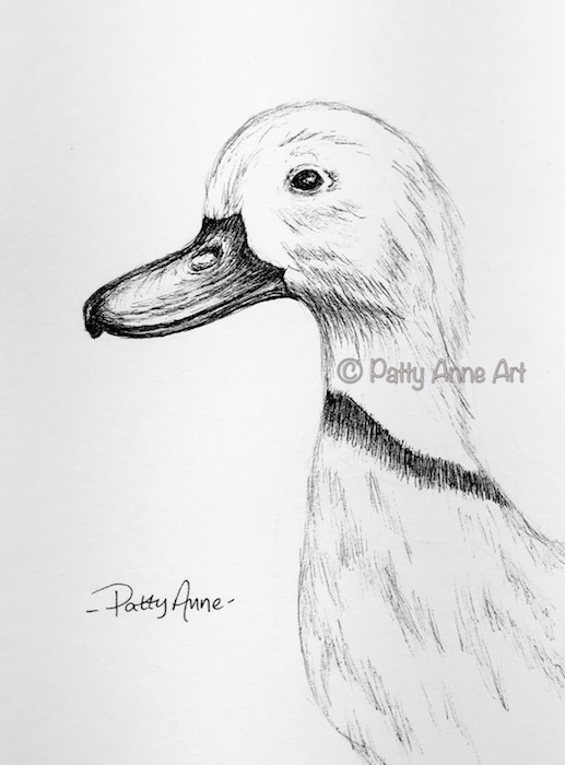 Duck ink sketch