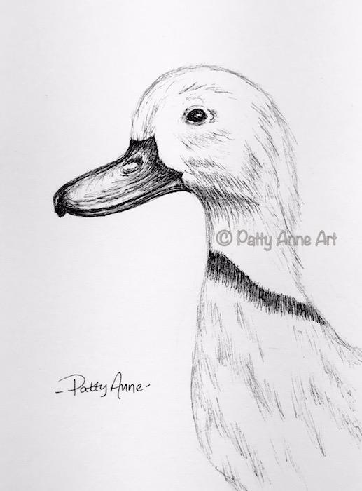 Duck ink sketch