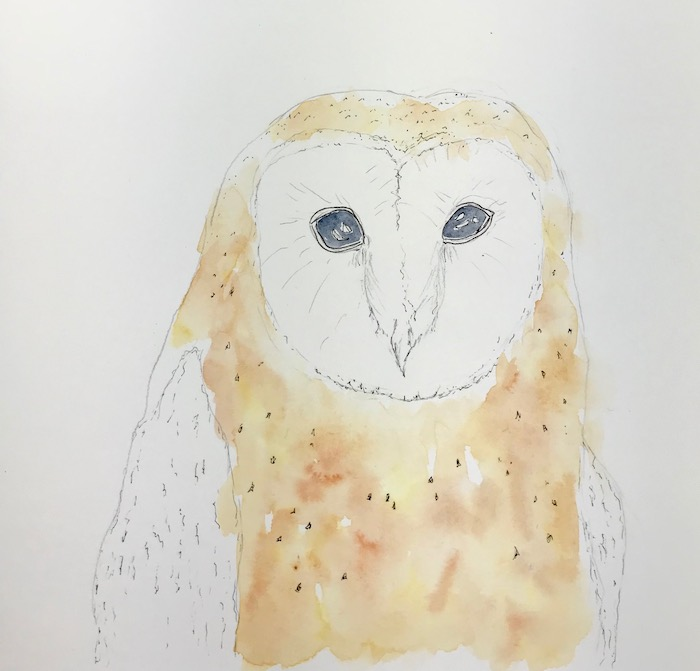 Barn owl watercolor 1st wash