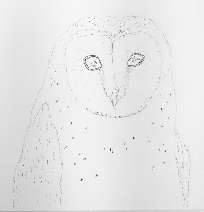 Barn owl initial sketch