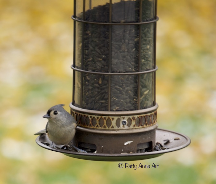 Titmouse at feeder
