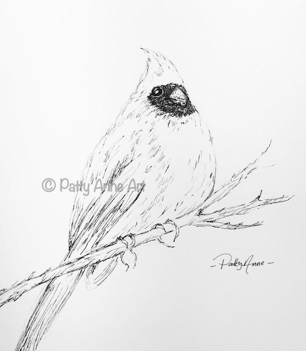 cardinal ink sketch