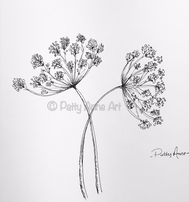 queen anne's lace ink sketch