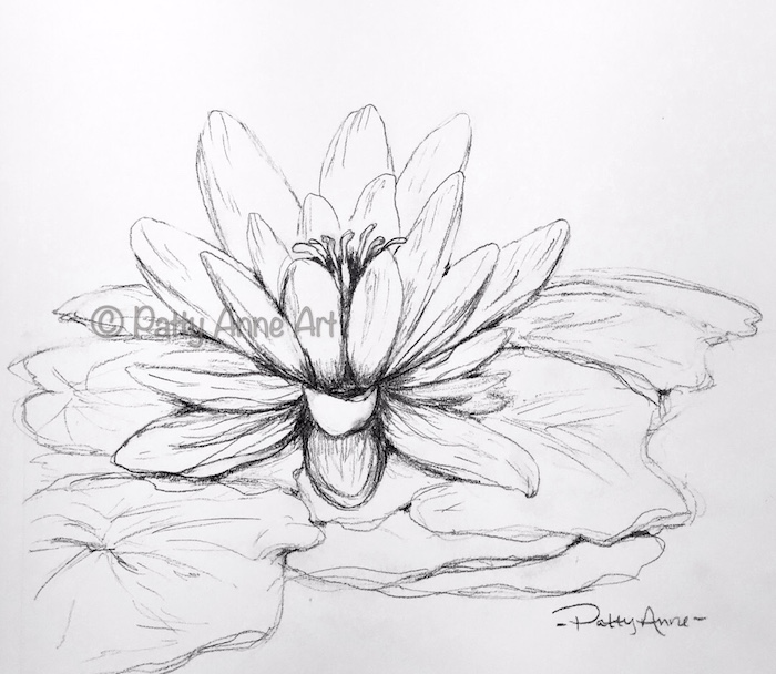 waterlily pencil sketch