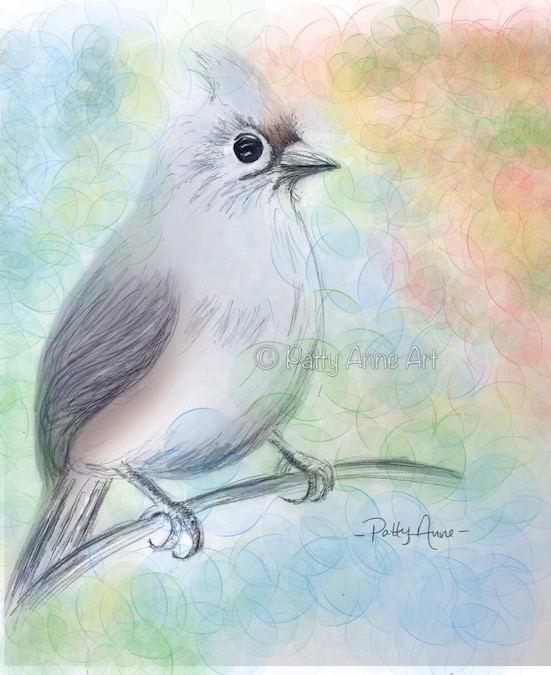 Tufted Titmouse bird Procreate digital art