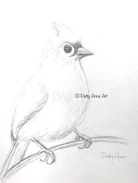tufted titmouse pencil sketch