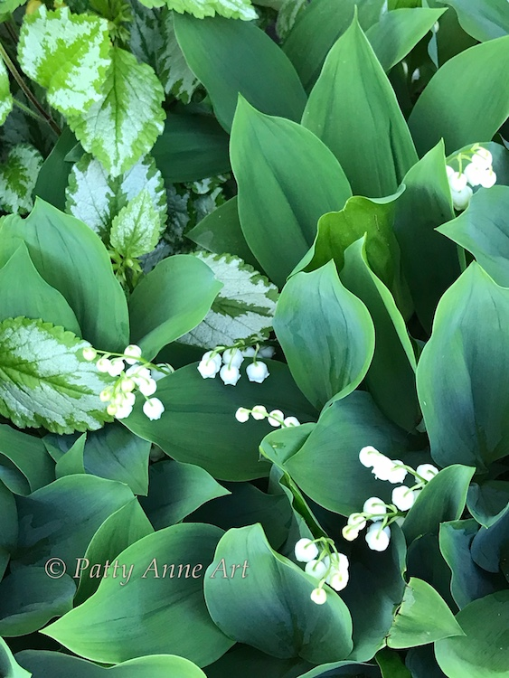 lily of the valley beauty photo