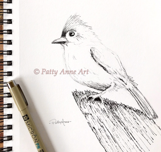 Tufted titmouse ink sketch