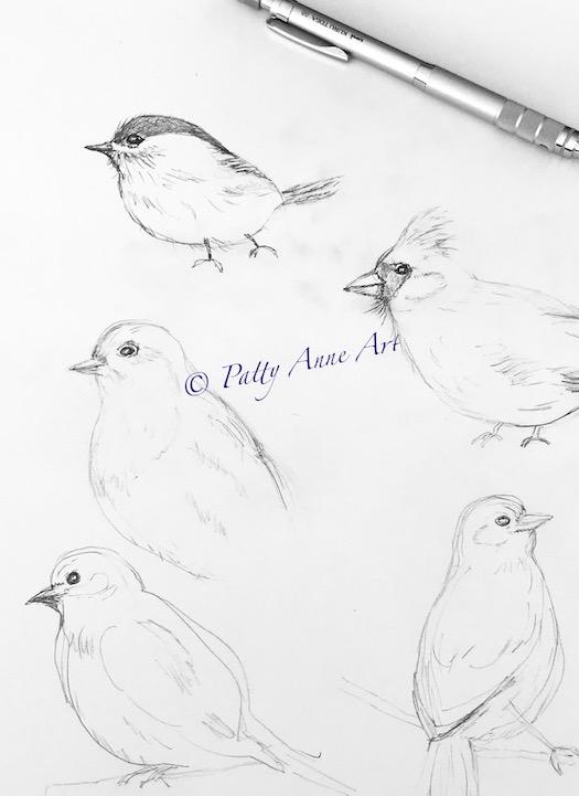 bird sketching practice