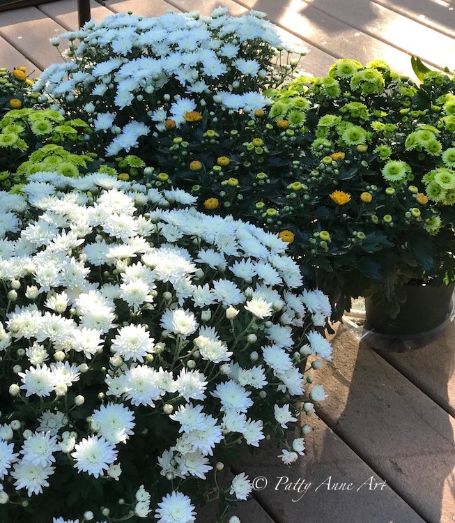 Fall mums on the deck